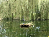 Bird sculpture and weeping willows in the Japanese Gardens.