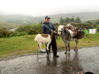 A roadside peddler by the River Caragh on the Ring of Kerry. If you look past the back end of the donkey there is an old stone bridge in the background.