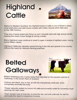 Highland cattle historic marker in Gretna Green, Scotland.