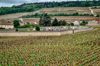 Walled cemetery surrounded by vineyards on the road between Dijon and Beaune in Burgundy.