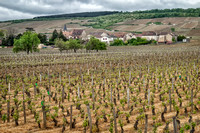 Miles of vineyards along the road between Dijon and Beaune in Burgundy.