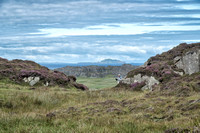 On the trail back from St. Columba's Bay on Iona with the Isle of Lunga in the center distance.