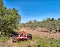 Olive orchard at Moulin du Mas des Barres where we visited the orchards and processing plant.