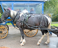 On of our patient carriage horses.